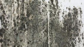 Form auf der weißen Wand stock video footage