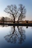 Form X eines einsamen Baums mit Reflexion Stockfotos