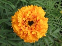 form för blommahjärtamitt Royaltyfri Fotografi