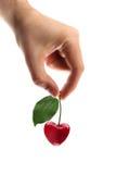 form för Cherryhandhjärta Royaltyfria Foton