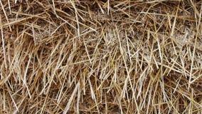 Form för lantgårddjur för vintern Stor bunt av den nära övre sikten för hö eller för sugrör lager videofilmer