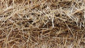 Form för lantgårddjur för vintern Stor bunt av den nära övre sikten för hö eller för sugrör stock video