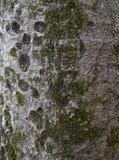 Form för mossa för trädskäll royaltyfri fotografi