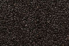 Form för spridning för nivå för organisk helig Basil Seed Ocimum tenuiflorum eller Tulsi oavkortad ram arkivbilder