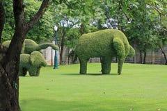 Form för trädbuskeelefant Royaltyfria Bilder