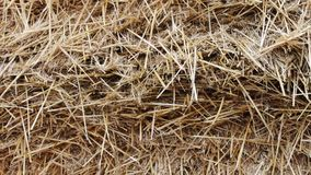 Form for farm animals for the winter.Large stack of hay or straw close up view. A form for farm animals for the winter.A large stack of hay or straw close up stock video