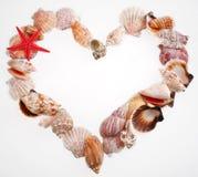 form för hjärta s shells valentinen Royaltyfri Bild
