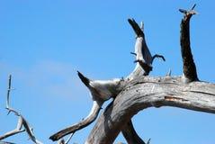 Formação da árvore Imagens de Stock