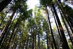 Formação da árvore Fotografia de Stock Royalty Free