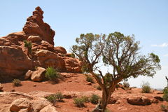 Formação da árvore e de rocha Fotografia de Stock Royalty Free