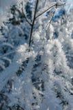 Formação de gelo da geada no close up dos ramos de árvore imagens de stock