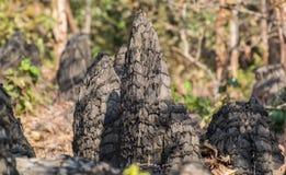Formação de rocha aguçado na Índia central foto de stock royalty free