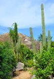Formação de rocha de Casibari Fotografia de Stock