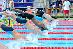 A formação em uma plataforma de lançamento da nadada Imagem de Stock Royalty Free