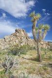 Formações de Joshua Trees e de rocha - Joshua Tree National Park, Ca Fotografia de Stock Royalty Free