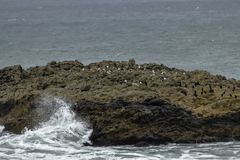 Formações de rochas bonitas com os pássaros perto de Half Moon Bay, Califórnia imagens de stock royalty free