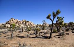 Formações icónicas de Joshua Trees e de rocha em Joshua Tree National Park Imagens de Stock Royalty Free
