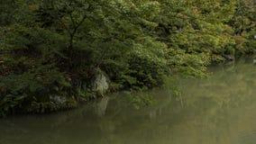 Forma agradável de árvores de bordo Foto de Stock Royalty Free