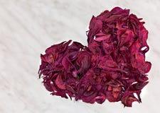 Forma d'annata del cuore fatta dai petali rosa del fiore di buio asciutto Immagini Stock Libere da Diritti