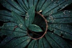 Forma d'arricciatura del sottobosco in profondità nella foresta pluviale fotografia stock