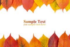 Forma de la enhorabuena en las hojas de otoño Foto de archivo libre de regalías