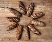 Forma de la flor de los conos del pino Imagen de archivo