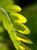 Forma de la planta en la naturaleza 9 Imágenes de archivo libres de regalías