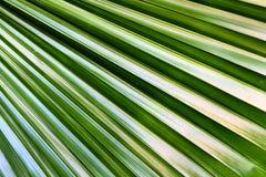 Forma de la textura de hoja de palma Fotos de archivo libres de regalías