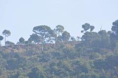 Forma de relieve de la colina verde con las plantas y los árboles Imágenes de archivo libres de regalías