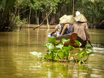 Forma de vida del delta del Mekong Foto de archivo