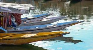 Forma de vida en el lago Dal, Srinagar Imagenes de archivo