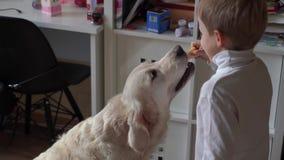 Forma de vida de la casa el niño pequeño juega en casa con su perro grande almacen de video