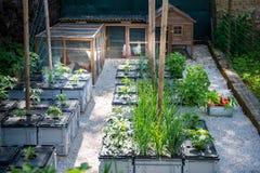 Forma de vida orgánica sana de la consumición y de la continuidad Ponedoras libres de huevo de la gama y verduras de cosecha prop imagenes de archivo
