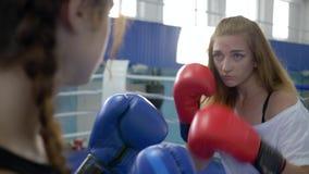 Forma de vida sana, boxeadores de la muchacha que entrenan en con guantes en el ring de boxeo en gimnasio almacen de video