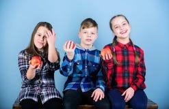 Forma de vida sana Los adolescentes del grupo sostienen manzanas El muchacho y los amigos de muchachas en ropa a cuadros similar  fotos de archivo libres de regalías