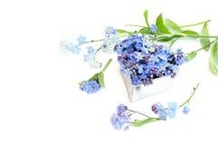 Forma del corazón con las flores de la nomeolvides aisladas en blanco Fotos de archivo libres de regalías