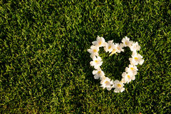 Forma del corazón de las flores blancas en un campo de hierbas verdes Foto de archivo libre de regalías
