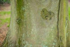 Forma del corazón tallada en un árbol Fotos de archivo libres de regalías