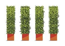 Forma del cubo dell'albero in vasi isolati su fondo bianco Ill di vettore Illustrazione di Stock