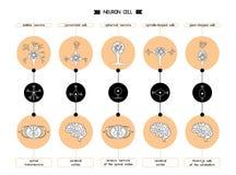 Forma del cuerpo de célula de la neurona Imágenes de archivo libres de regalías