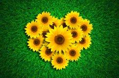 Forma del cuore con i girasoli sul prato dell'erba verde fotografia stock