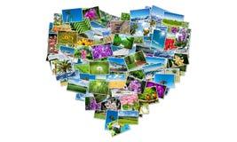 Forma del cuore fatta delle foto della natura Fotografia Stock