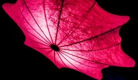 Forma del paraguas de la iluminación de las pequeñas lámparas en la noche Foto de archivo libre de regalías