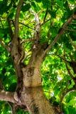 Forma dell'albero Fotografie Stock
