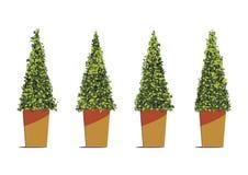 Forma dell'albero del triangolo in vasi isolati su fondo bianco Illustrazione Vettoriale