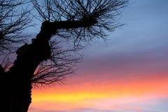 Forma dell'albero su un tramonto Immagine Stock