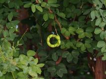 Forma della O in natura Fotografie Stock Libere da Diritti