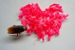 Forma di gomma rosa del cuore e piccola blatta immagini stock