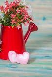 Forma do coração com a lata molhando vermelha Ainda vida 1 Fotografia de Stock