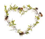 A forma do coração da árvore de cereja floresce e abelhas no branco Fotos de Stock Royalty Free